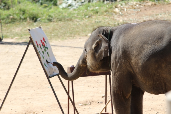 Elephant the Painter