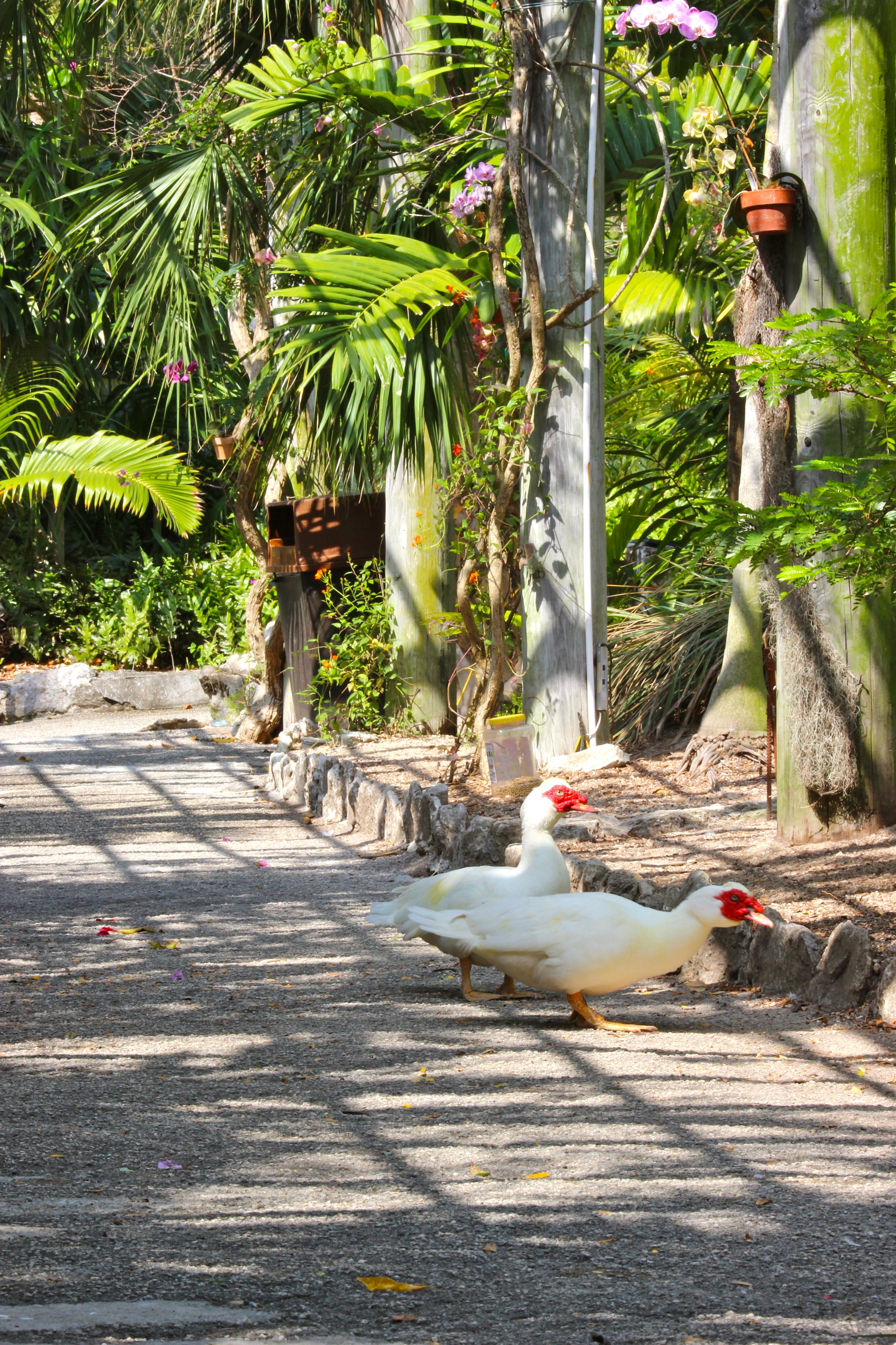 Walk through healing garden in the bahamas drchana - When you walk through the garden ...